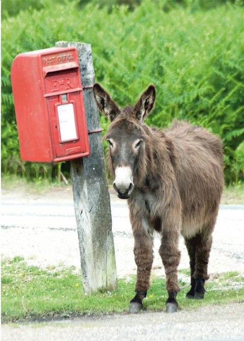 Waiting For The Mail Donkey Greetings Card